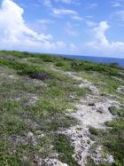 Rocky Path 1